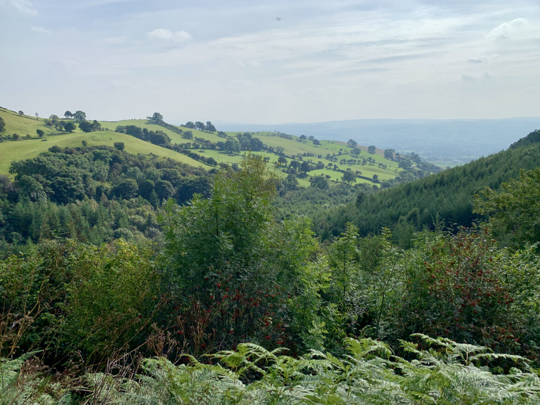 Coed Llangwyfan, North Wales